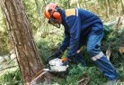 Freshwater Creek Tree cutting services 21