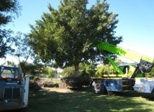Kwikfynd Tree Management Services freshwatercreek