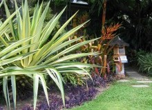 Kwikfynd Tropical Landscaping freshwatercreek